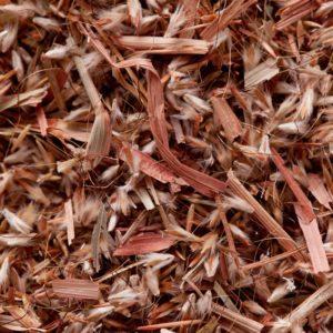 Palmarosa grass seeds (Cymbopogon martinii) zur Gewinnung von Palmarosaöl bio