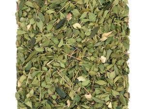 Agathosma-betulina_Buccoblätter