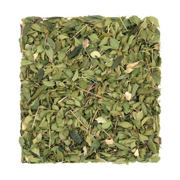 Agathosma-betulina_Buccoblätter zur Gewinnung von Buccoblätter - Barosma betulina (ätherisches Öl)