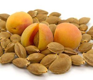 Aprikosenkerne zur Gewinnung von Aprikosenkernöl nativ bio