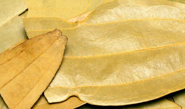 Zimtblatt zur Gewinnung von Zimtblätter (ätherisches Öl)