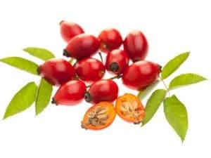 Wildrosen Hagebutten zur Gewinnung von Wildrosenöl nativ bio (Hagebuttenöl bio)