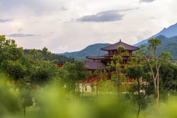 Hinoki_japanische Zypresse
