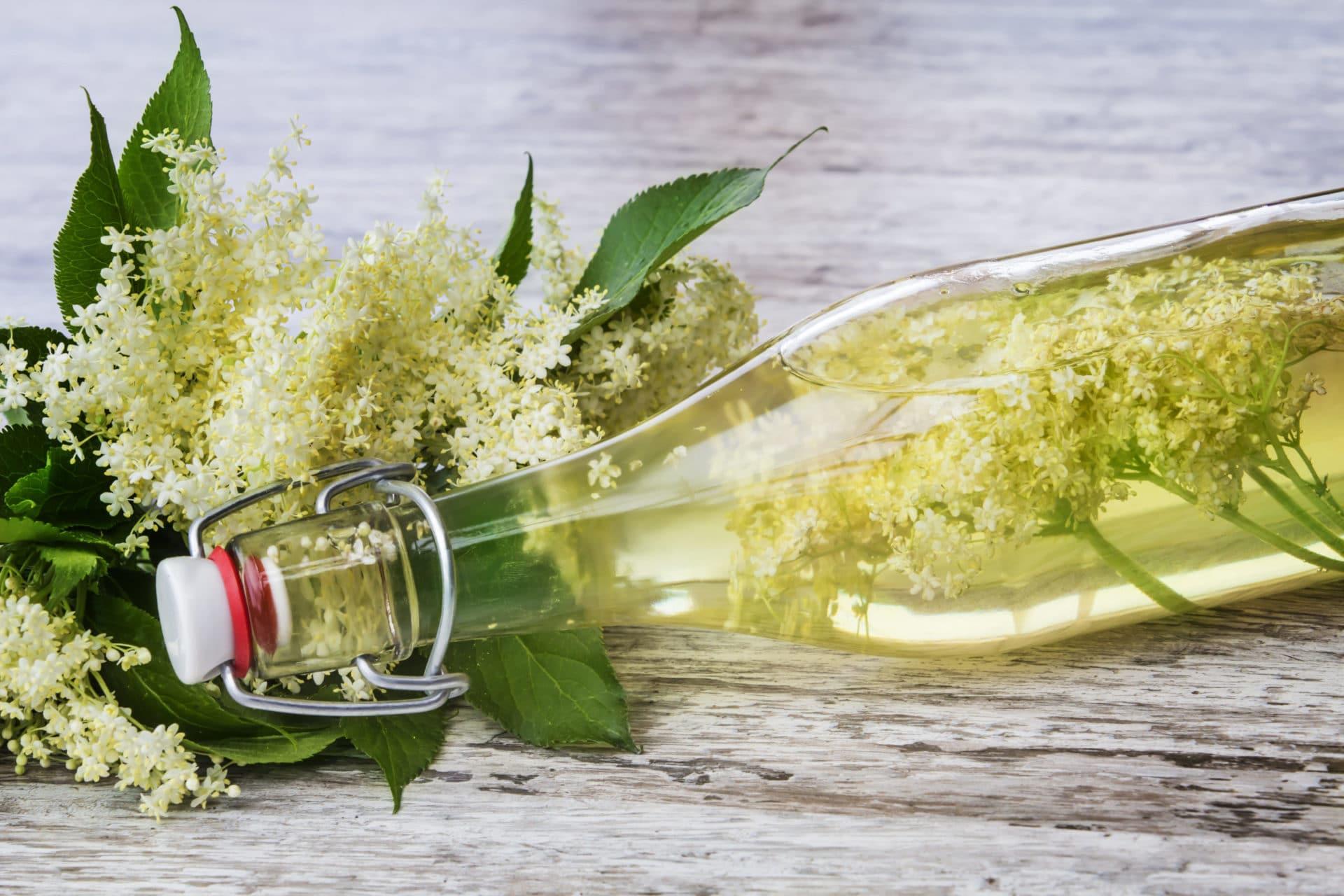 Holunderblüten mit Flasche gefüllt mit Holunderblütenwasser (Holunderblütenhydrolat)
