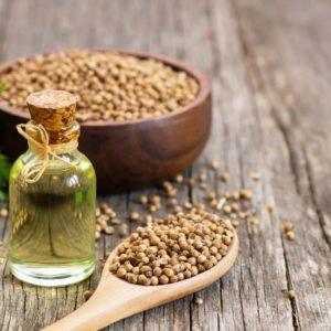 Koriandersamen und ätherisches Öl in Flasche zur Gewinnung von Koriandersamen Öl (Coriandrum sativum)