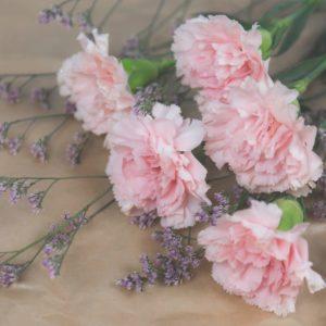 Nelken zur Gewinnung von Nelkenstiel bio (Syzgium aromaticum)