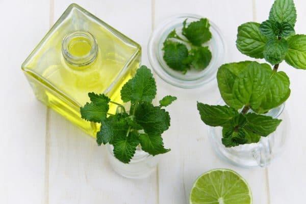 Pfefferminze Blätter und Öl zur Herstellung von Airspray Pfefferminze bio (Raumspray)