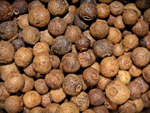 Pimentbeeren-allspice zur Gewinnung von Pimentbeerenöl Jamaika (ätherisches Öl)