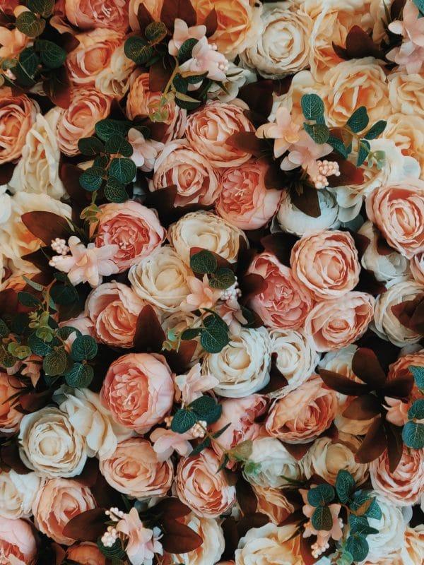Rosa damascena zur Gewinnung von Rose Türkei absolue bio 20% (Alkoholverdünnung)