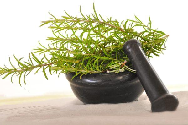 Rosmarin campher zur Gewinnung von Rosmarin Campher bio (ätherisches Öl)