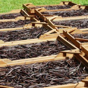 Vanilleschoten zur Herstellung von Vanille Bourbon Oleoresin bio 35% (Alkoholverdünnung)