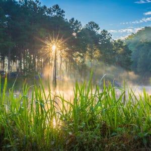 Vetiver Gras zur Gewinnung von Vetiver Haiti bio