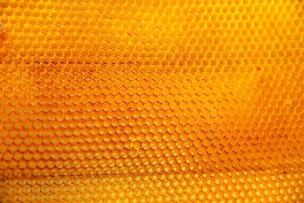 Honigwaabe zur Herstellung von Honig absolue bio 50% (Alkoholverdünnung)