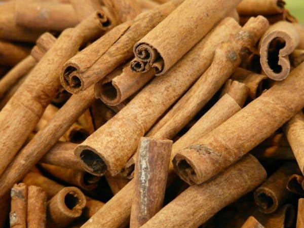 Zimtrinden zur Gewinnung von Zimtrinde superior bio (ätherisches Öl)