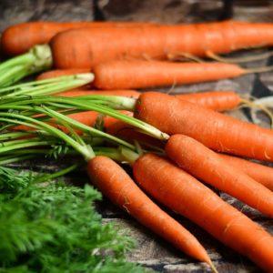 Karotten und Möhren mit Grün zur Gewinnung von Karottenwasser bio (Karottenhydrolat)