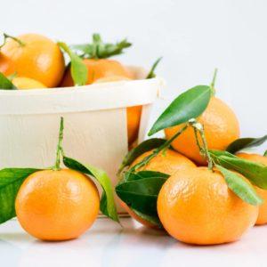 Mandarinen mit Zweigen und Blättern zur Gewinnung von Petit Grain Mandarine (ätherisches Öl)