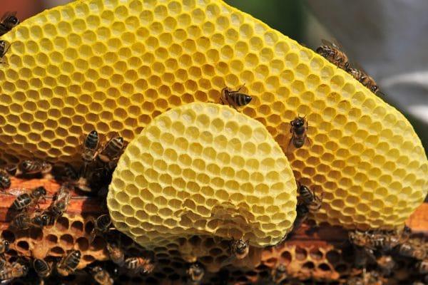 Bienen und Wachs zur Gewinnung von Bienenwachs gelb bio