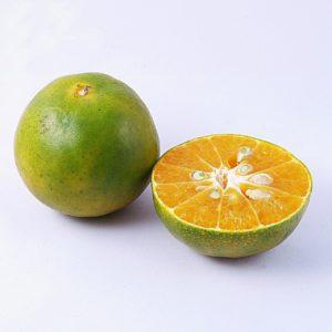 grüne Mandarine_tangerine-green zur Gewinnung von Mandarine grün bio (ätherisches Öl)
