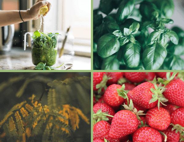 Ätherische Öle aus Pflanzen und Kräutern aus aller Welt