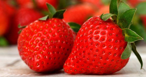 Erdbeeren zur Gewinnung von Erdbeersamenöl bio (kaltgepresst)