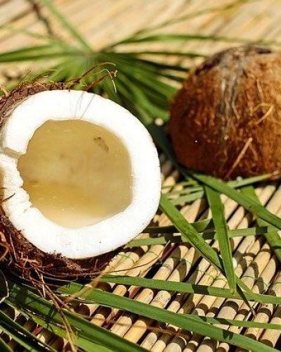 Kokosnuss zur Herstellung von Kokosöl virgin 100% bio (kaltgepresst)